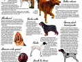 History of Hounds